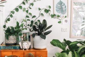 emf plants